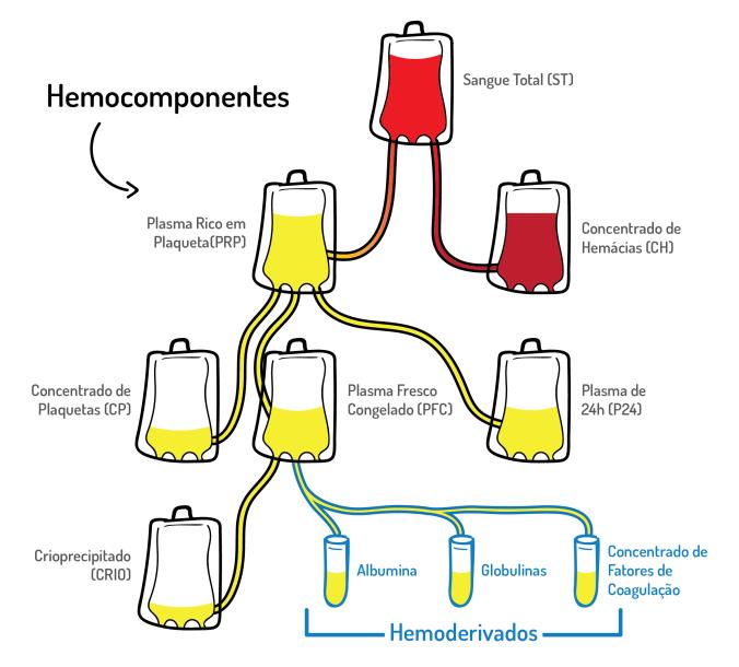 hemocomponetes1